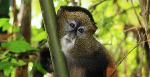 Primate tours in Africa