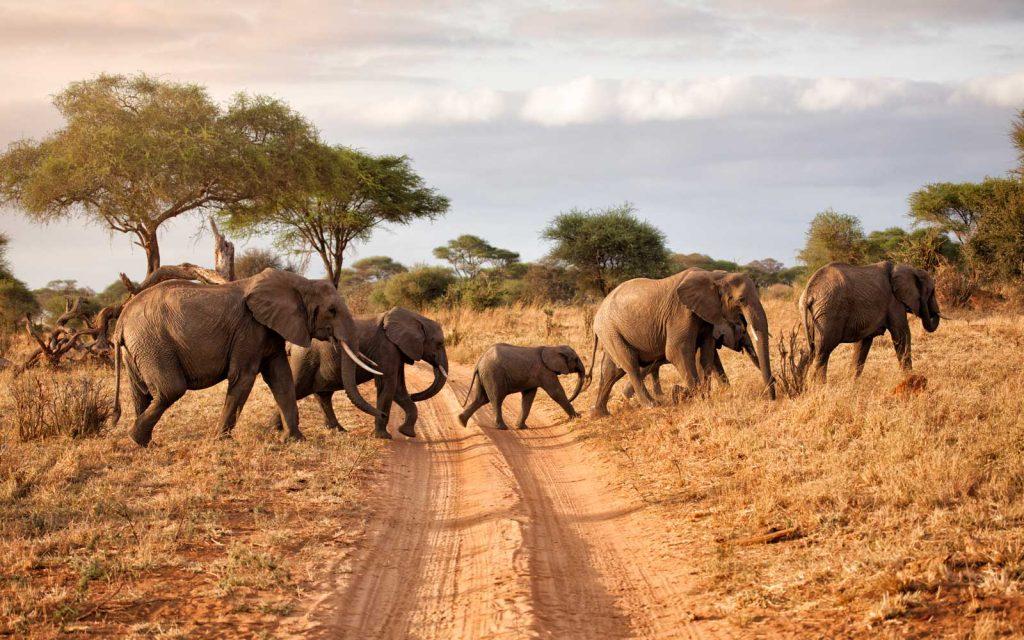 Kenya game viewing tours