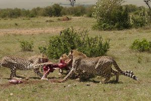 Attractions/Activities in Masai Mara NP