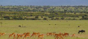 Engagi Safaris