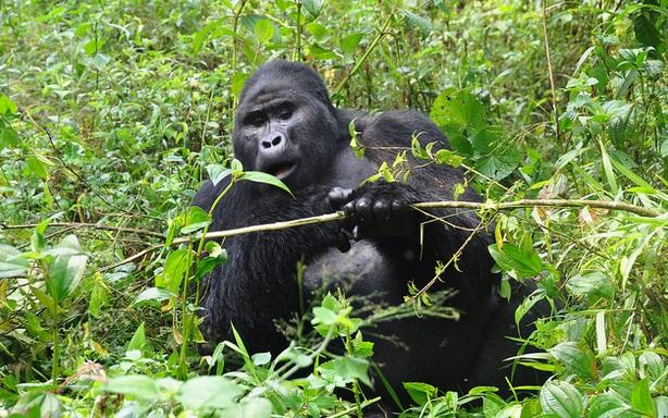 Bwindi gorilla treks