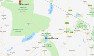 Tanzania Game safaris