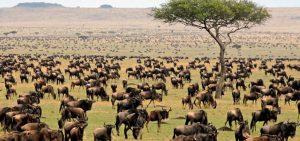 Tanzania game tours