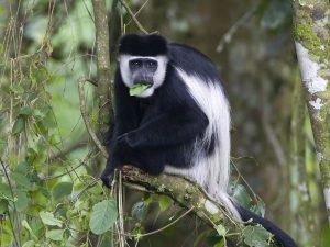 2 Days Kibale Forest National park tour