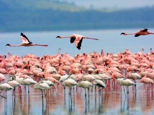2 Days Lake Nakuru NP