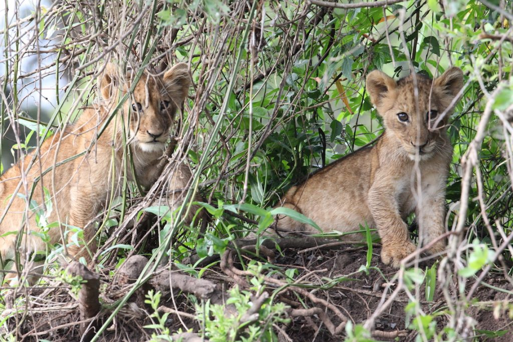 Rwanda game viewing tours