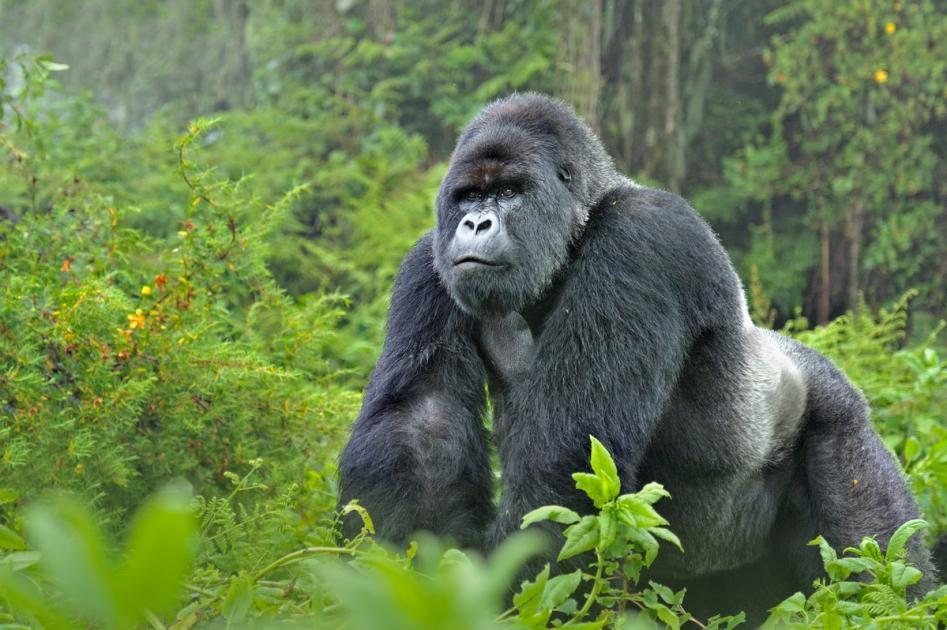 2 Days Uganda gorllla trip