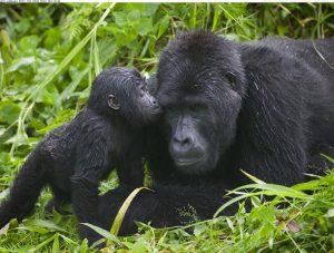 Bwindi Gorilla Tours
