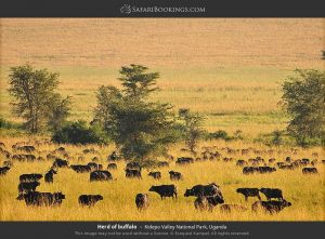 Game viewing in Kidepo Valley