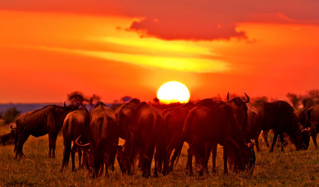 10 Days Kenya Safari